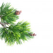 Close up of fir tree branch — Stock Photo #10017005