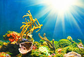 Colorful underwater world with sun — Stock Photo