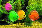 Fishes in different color in water — Stock Photo