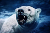 Angry polar bear — Stock Photo