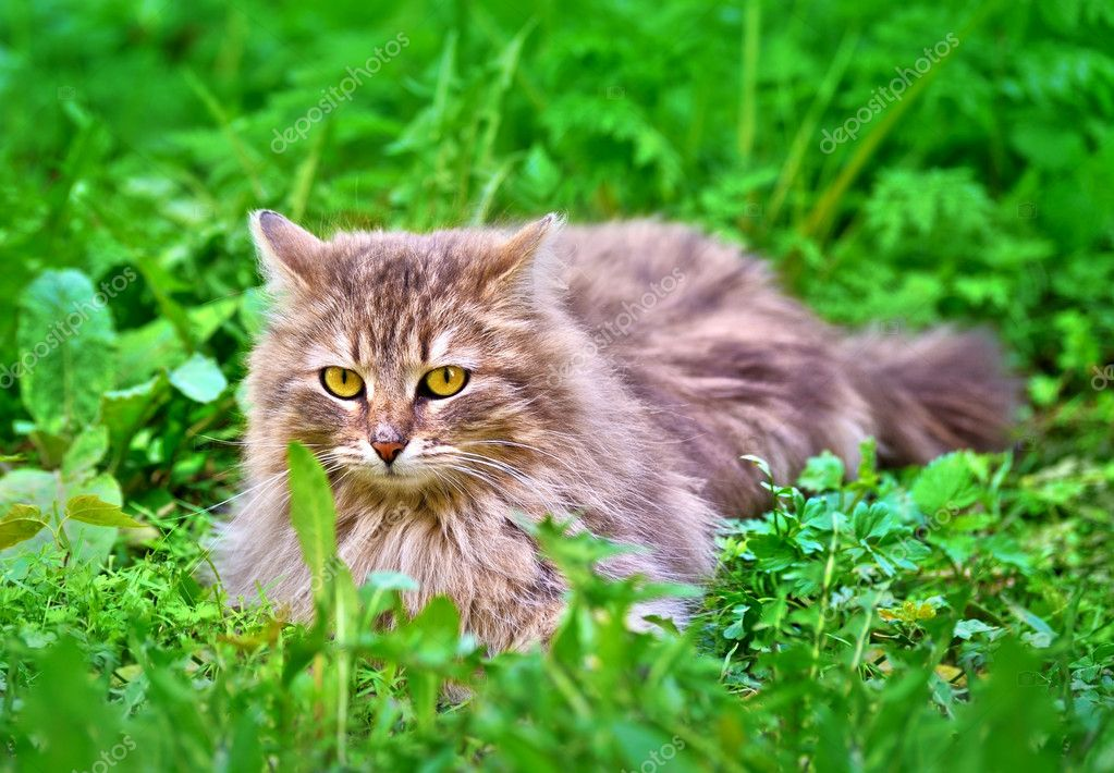 Cat on the green grass — Stock Photo #10016726