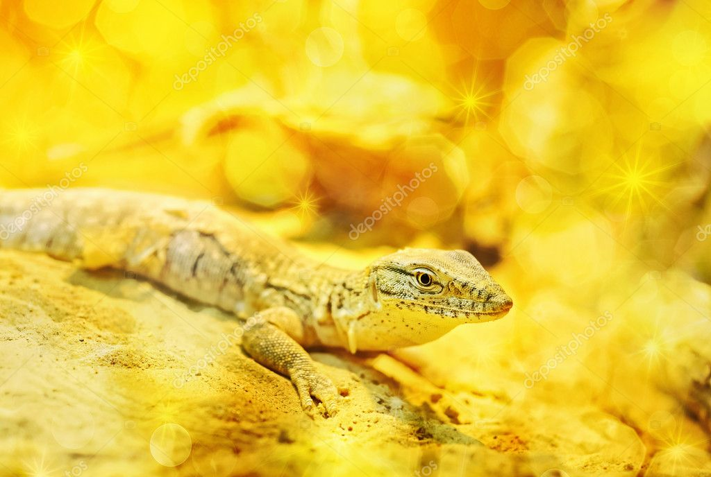 Golden dragon as symbol of 2012 year — Stock Photo #10016743