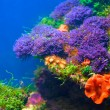 Foto Stock: Colorful underwater