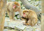 Two monkeys — Stock Photo