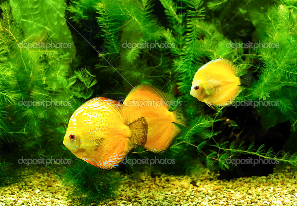 Little fishes in aquarium — Stock Photo #10129655