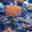 Colourful coral reef - Photo