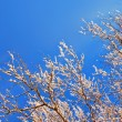 Stock Photo: Tree branches in snow