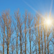 Trees with sun beam — Stock Photo