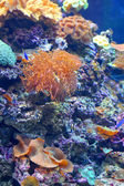 Colourful coral reef — Stock Photo