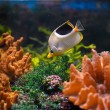 Colorful underwater world — Stockfoto #10273679