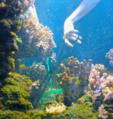 Cleaning of aquarium by hands — Stock Photo