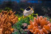 Kleurrijke onderwaterwereld — Stockfoto