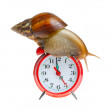 Snail on clock — Stock Photo