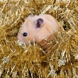 Little hamster in tinsel - Stock Photo