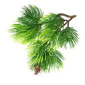 Detailní záběr izolované větve stromu jedle — Stock fotografie