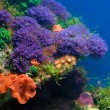 Foto Stock: Colorful underwater world
