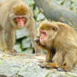 Two monkeys - Stockfoto