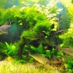 Fish in the algae — Stock Photo #10604405