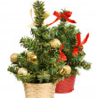 Two christmas tree - Stock Photo