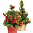 Two christmas tree — Stock Photo