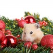 Funny little hamster — Stock Photo #10604464