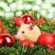 Funny little hamster — Stockfoto