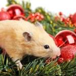 divertido pequeño hamster — Foto de Stock