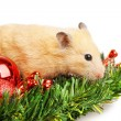 Hamster on fir branch isolated - Stock Photo