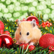 Funny little hamster - Stock Photo