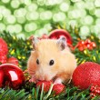 Stock Photo: Funny little hamster