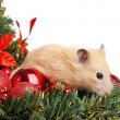 Funny little hamster — Foto Stock