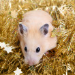 Little hamster in tinsel — Foto de Stock
