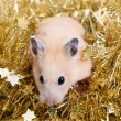 Little hamster in tinsel — Stock fotografie