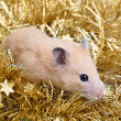 Little hamster in tinsel — Stock Photo #10604480