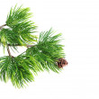 Close up of fir tree branch — Stock Photo #10604490
