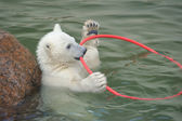 Little white polar bear playing — Stock Photo
