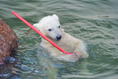 Little white polar bear playing in water — Stock Photo