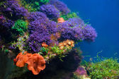Colorful underwater world — Foto Stock