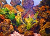 Underwater world with stones — Stock Photo