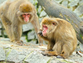 Two monkeys — Foto Stock