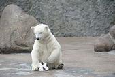 Little polar bear with soccer ball — Stock Photo