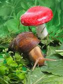 улитка вблизи гриб — Стоковое фото