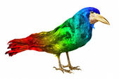 Colourful crow isolated — Stock Photo