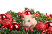 Lustige kleine hamster — Stockfoto