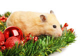 Hamster on fir branch isolated — Stock Photo
