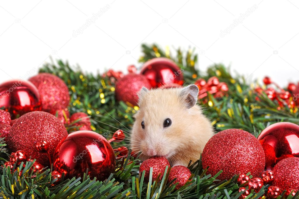 Funny little hamster in branch of fir  Foto Stock #10604464