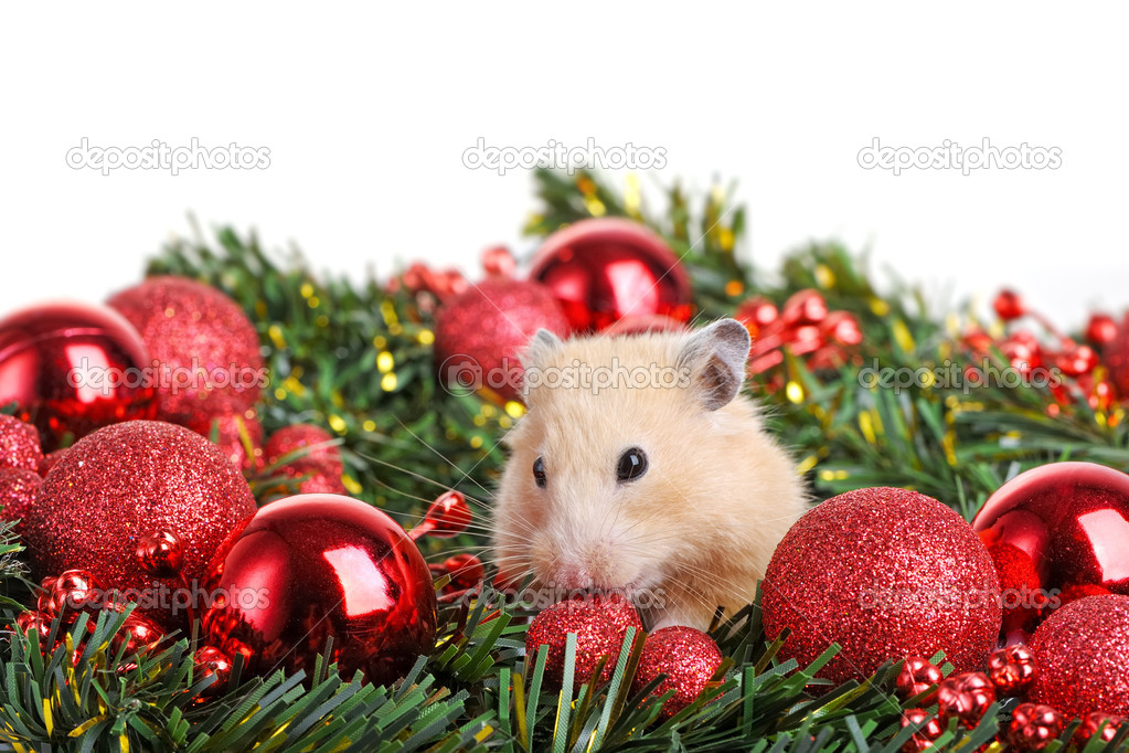 Funny little hamster in branch of fir  Stock Photo #10604464