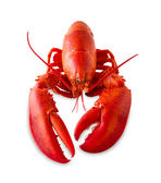 Isolated red lobster — Stock Photo