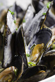 Macro mussel — Stock Photo