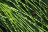 ökologie und gras — Stockfoto